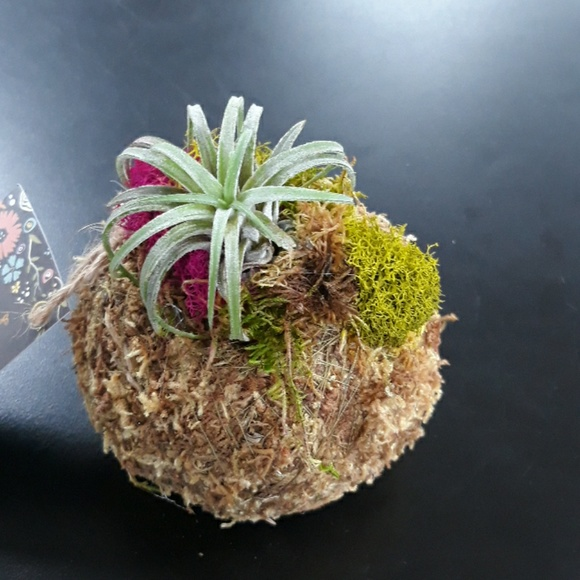 Rainey's WhimZ's Other - Moss bowl with Air Plant